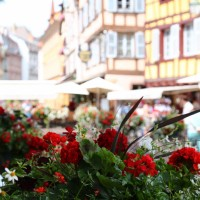 Alsace, part 1- The Land of Wine and Flowers